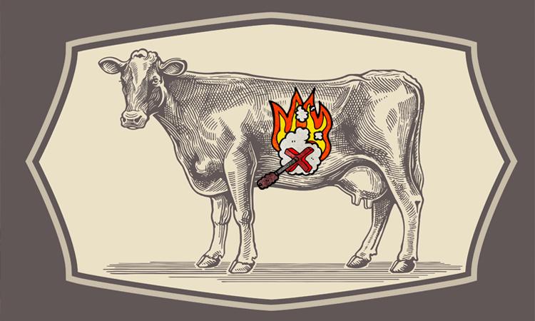 焼印を押される家畜